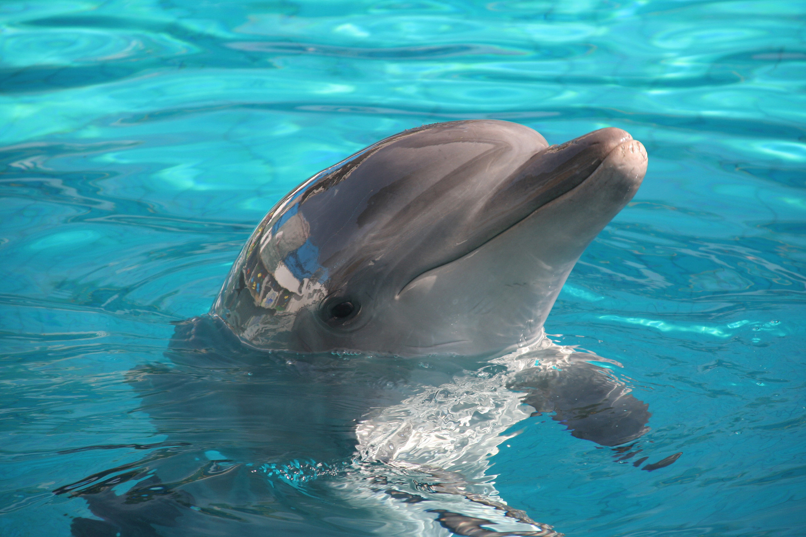 zwemmen met dolfijnen Rob Land Reizen