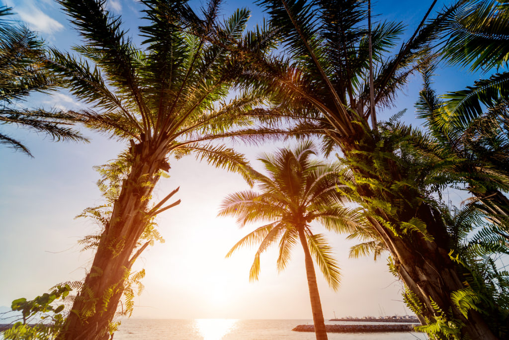 Beautiful tropical beach with palm trees. Daylight background