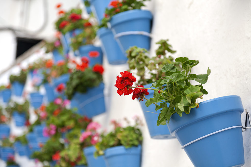 White wall with flower pots. Typical Spanish villages. colorful flowers